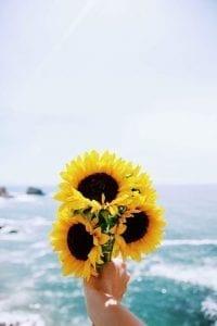 flores hermosas para fondo de pantalla