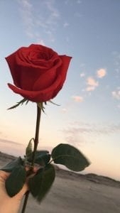 fondos de pantalla de flores rosas