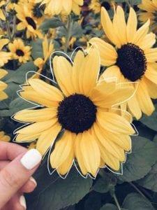 fondos de pantalla tumblr de flores
