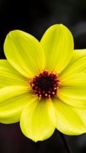 fondos de pantallas de flores