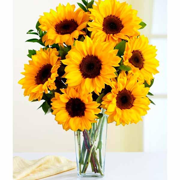 Flores Bonitas Fotos Imágenes De Flores Bonitas