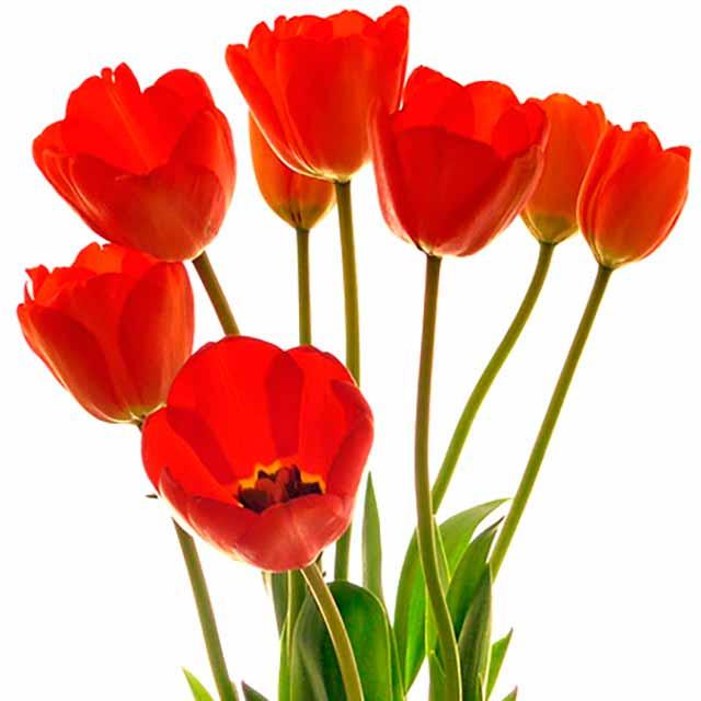 Flores bonitas fotos im genes de flores hermosas - Fotos de plantas bonitas ...